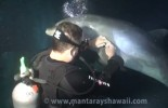 (VIDEO): Bottlenose Dolphin Rescue