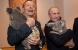 (PHOTO): Taxpayers spent $24,000 to hire koalas to cuddle world leaders at the G20 in Brisbanе