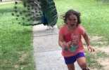 (PHOTO) Girl running away from peacock becomes internet sensation